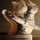 千万别让俩只猫一起,不然。。。笑cry~