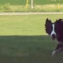 我的天呐!狗居然比猫聪明!