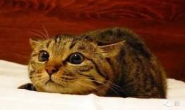 关于猫咪肠胃症状:软便和腹泻的治疗