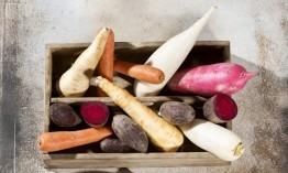 甘蔗渣 用来养绿萝能绕家几圈