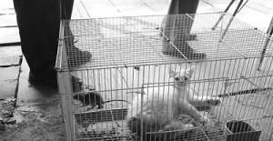 猫鼠同笼(图)