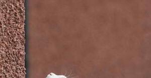 """英国老猫攀爬高墙被称""""蜘蛛猫""""(组图)"""