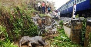 印度大象交通意外中受伤
