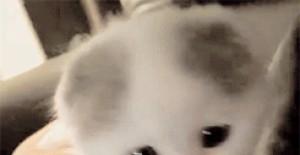 「猫咪控」小奶猫专属必杀技!看完之后血槽瞬