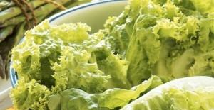 月经期能吃生菜吗